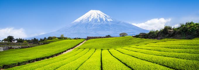 Zelený čaj a imunita